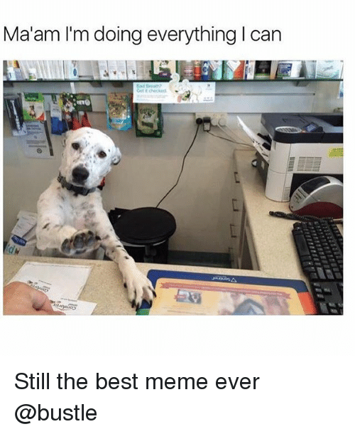 MêMes: Ma'am I'm doing everything I can Still the best meme ever @bustle