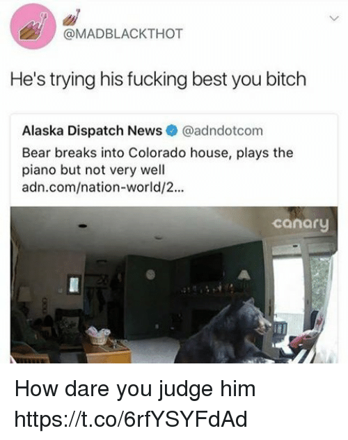 bearings: @MADBLACKTHOT  He's trying his fucking best you bitch  Alaska Dispatch News@adndotcom  Bear breaks into Colorado house, plays the  piano but not very well  adn.com/nation-world/2...  canary How dare you judge him https://t.co/6rfYSYFdAd