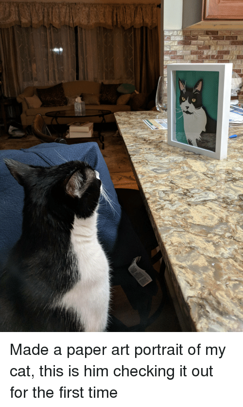 paper art: Made a paper art portrait of my cat, this is him checking it out for the first time