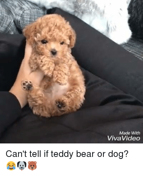 Bear Or Dog