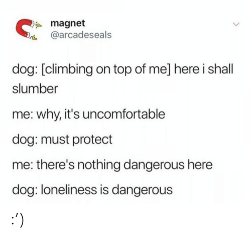 uncomfortable: * magnet  @arcadeseals  dog: [climbing on top of me] here i shall  slumber  me: why, it's uncomfortable  dog: must protect  me: there's nothing dangerous here  dog: loneliness is dangerous :')