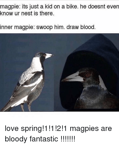 magpie: magpie: its just a kid on a bike. he doesnt even  know ur nest is there.  inner magpie: swoop him. draw blood love spring!1!1!2!1 magpies are bloody fantastic !!!!!!!