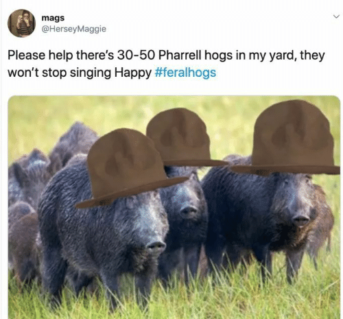 Pharrell, Singing, and Happy: mags  @HerseyMaggie  Please help there's 30-50 Pharrell hogs in my yard, they  won't stop singing Happy