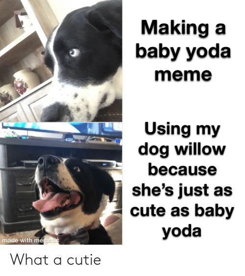 Cute, Meme, and Yoda: Making a  baby yoda  meme  Using my  dog willow  because  %24  she's just as  cute as baby  yoda  made with mematic What a cutie