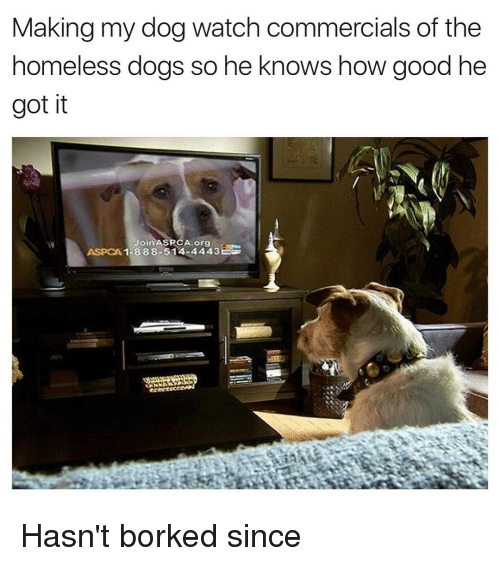 Børk: Making my dog watch commercials of the  homeless dogs so he knows how good he  got it  Join ASPCA org  ASPCA 1-888-514-4443 Hasn't borked since