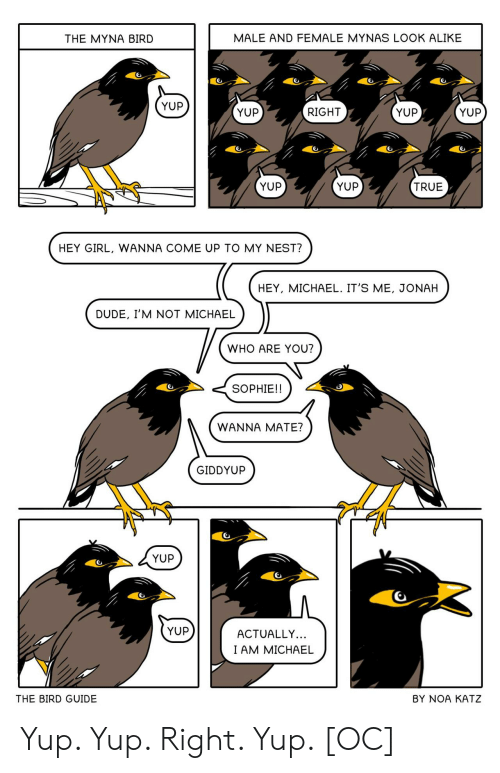 the bird: MALE AND FEMALE MYNAS LOOK ALIKE  THE MYNA BIRD  YUP  YUP  YUP  RIGHT  YUP  YUP  YUP  TRUE  HEY GIRL, WANNA COME UP TO MY NEST?  HEY, MICHAEL. IT'S ME, JONAH  DUDE, I'M NOT MICHAEL  WHO ARE YOU?  SOPHIE!!  WANNA MATE?  GIDDYUP  YUP  YUP  ACTUALLY...  I AM MICHAEL  THE BIRD GUIDE  BY NOA KATZ Yup. Yup. Right. Yup. [OC]