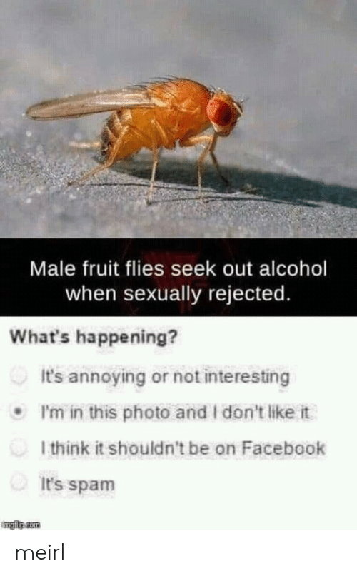 i dont like it: Male fruit flies seek out alcohol  when sexually rejected.  What's happening?  It's annoying or not interesting  I'm in this photo and I don't like it  l think it shouldn't be on Facebook  It's spam  - meirl