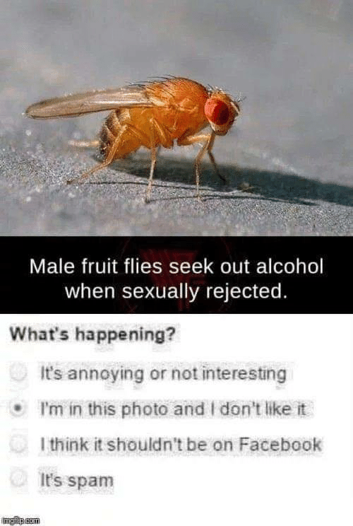 i dont like it: Male fruit flies seek out alcohol  when sexually rejected.  What's happening?  It's annoying or not interesting  I'm in this photo and I don't like it  l think it shouldn't be on Facebook  It's spam  imgip.gom