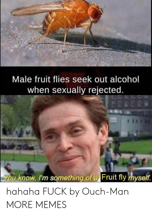 Dank, Memes, and Target: Male fruit flies seek out alcohol  when sexually rejected.  You know, I'm something of a Fruit fly myself. hahaha FUCK by Ouch-Man MORE MEMES