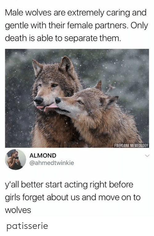 Dank, Girls, and Death: Male wolves are extremely caring and  gentle with their female partners. Only  death is able to separate them.  FB@DANK MEMEOLOGY  ALMOND  @ahmedtwinkie  y'all better start acting right before  girls forget about us and move on to  wolves patisserie