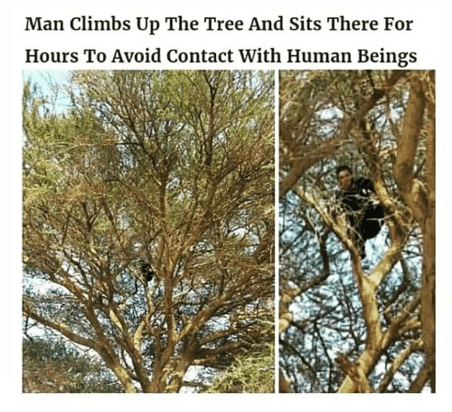 Tree, Human, and Man: Man Climbs Up The Tree And Sits There For  Hours To Avoid Contact With Human Beings