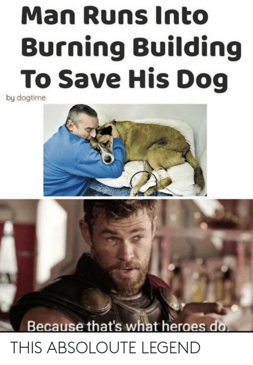 Heroes, Legend, and Dog: Man Runs Into  Burning Building  To Save His Dog  by dogtime  Because that's what heroes do THIS ABSOLOUTE LEGEND