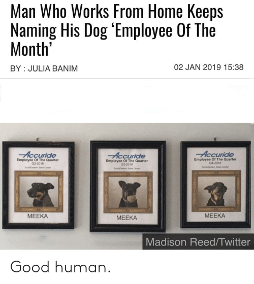 sales: Man Who Works From Home Keeps  Naming His Dog 'Employee Of The  Month'  02 JAN 2019 15:38  BY JULIA BANIM  Accuride  Accuride  Accuride  Employee Of The Quarter  04-2016  Employee Of The Quarter  Q2-2016  Employee Of The Quarter  Q3-2016  SouEaste Sales Center  SoueNEastem Sales Center  SouthEasm Sas Cente  МЕЕКА  МЕЕКА  МЕЕКА  Madison Reed/Twitter Good human.