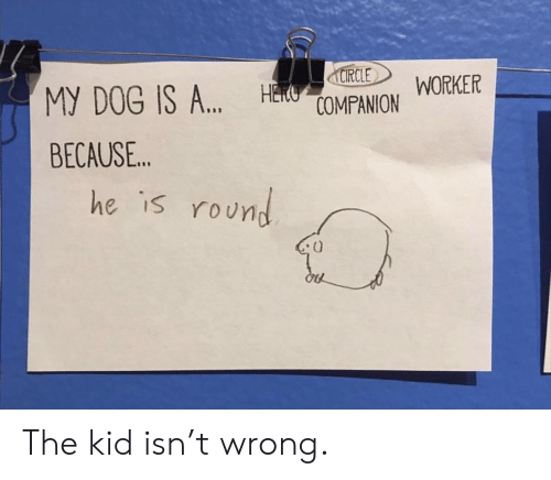 """manor: Manor WORKER  RCLE  MY DOG IS A"""",  BECAUSE..  H  he is roUn The kid isn't wrong."""