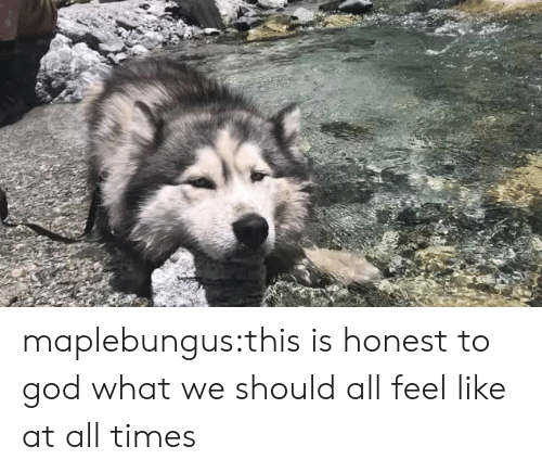 God, Tumblr, and Blog: maplebungus:this is honest to god what we should all feel like at all times