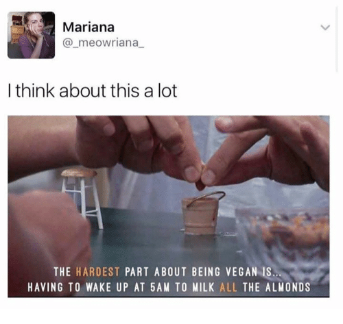 Mariana: Mariana  @_meowriana  I think about this a lot  THE HARDEST PART ABOUT BEING VEGAN IS  HAVING TO WAKE UP AT 5AM TO MILK ALL THE ALMONDS