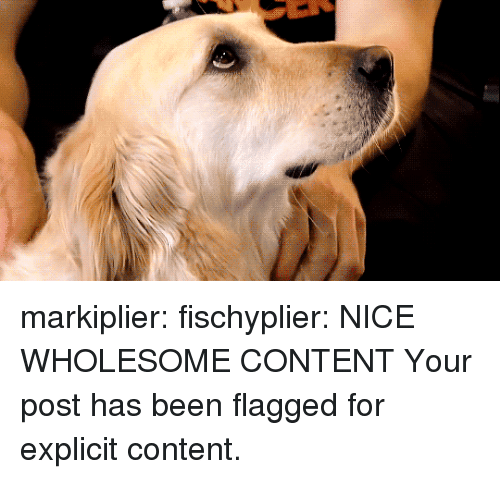 markiplier: markiplier:  fischyplier:  NICE WHOLESOME CONTENT  Your post has been flagged for explicit content.