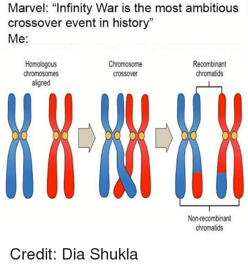"Memes, History, and Infinity: Marvel: ""Infinity War is the most ambitious  crossover event in history""  Me:  Homologous  chromosomes  aligned  Chromosome  crossover  Recombinant  chromatids  Non-recombinant  chromatids Credit: Dia Shukla"