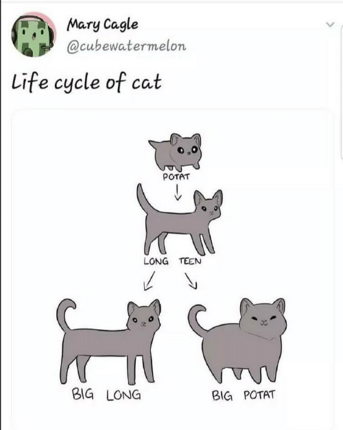 Life, Cat, and Big: Mary Cagle  @cubewatermelon  Life cycle of cat  POTAT  LONG TEEN  BIG LONG  BIG POTAT