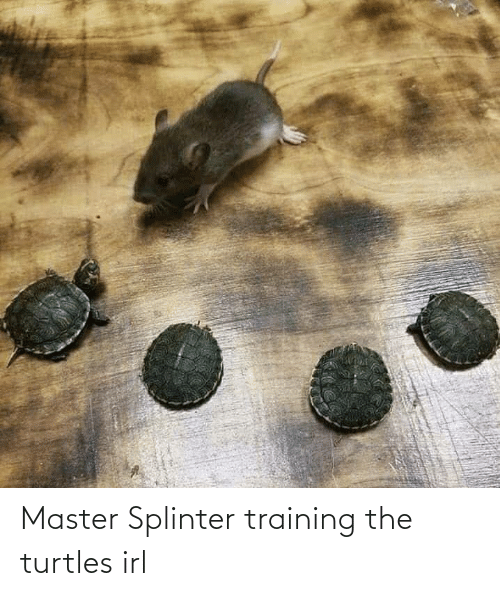 turtles: Master Splinter training the turtles irl