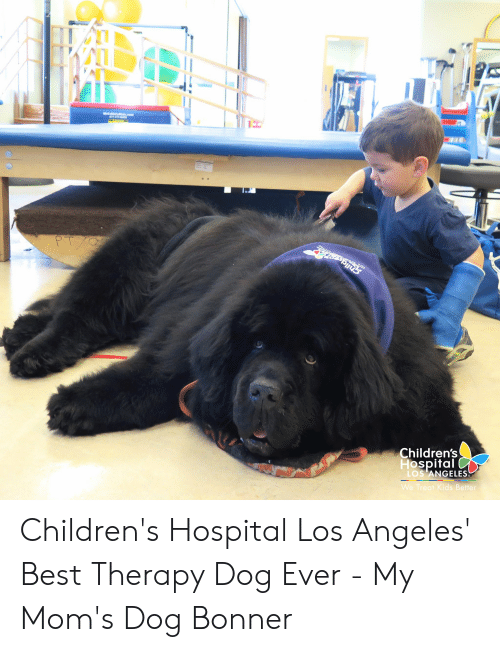 Moms, Best, and Children's Hospital: Matat s.com  877-  Je  PTYO  Children's  Hospital  LOS ANGELES  We Treat Kids Better Children's Hospital Los Angeles' Best Therapy Dog Ever - My Mom's Dog Bonner