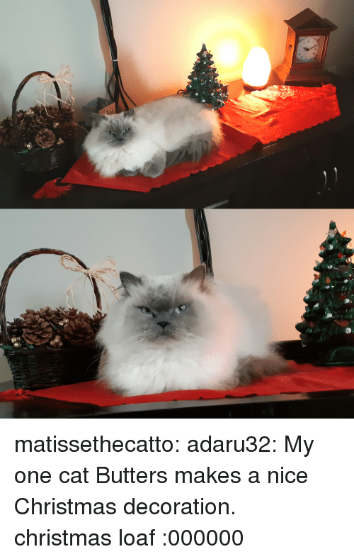 butters: matissethecatto:  adaru32:  My one cat Butters makes a nice Christmas decoration.  christmas loaf  :000000