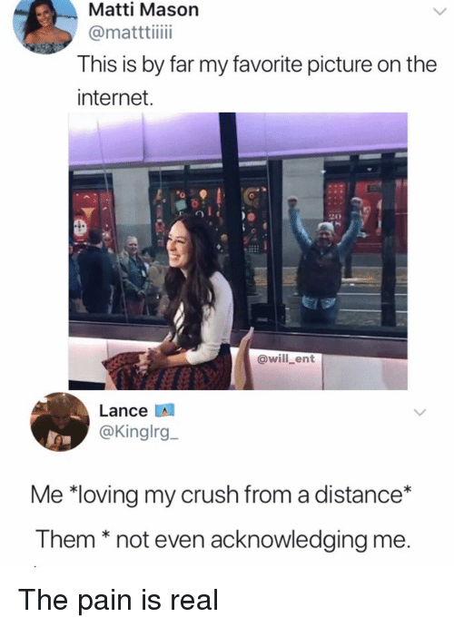 Crush, Internet, and Memes: Matti Mason  @matttiiii  This is by far my favorite picture on the  internet  @will_ent  Lance A  @Kinglrg  Me *loving my crush from a distance*  I hemnot even acknowledgina me The pain is real