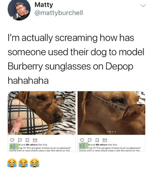 Memes, Nova, and Sunglasses: Matty  @mattyburchell  I'm actually screaming how has  someone used their dog to model  Burberry sunglasses on Depop  hahahaha  and 88 others like this  and 88 others like this  mg Il!! The pengest rimless burb sunglasses!  Come with a nova check case n got the same on the  mg I!!! The pengest rimless burb sunglasses!  Come with a nova check case n Rot the same on the 😂😂😂