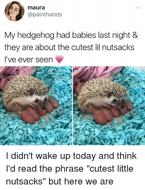 """Thinked: maura  @painthands  My hedgehog had babies last night &  they are about the cutest lil nutsacks  I've ever seen I didn't wake up today and think I'd read the phrase """"cutest little nutsacks"""" but here we are"""