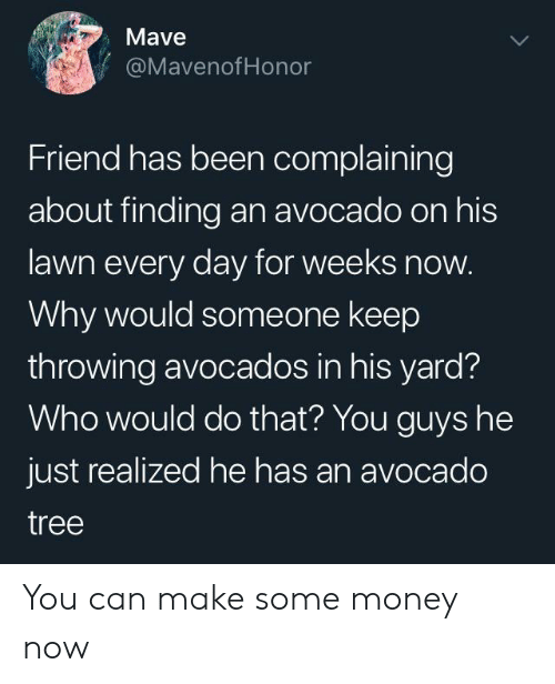 Avocado: Mave  @MavenofHonor  Friend has been complaining  about finding an avocado on his  lawn every day for weeks now.  Why would someone keep  throwing avocados in his yard?  Who would do that? You guys he  just realized he has an avocado  tree You can make some money now