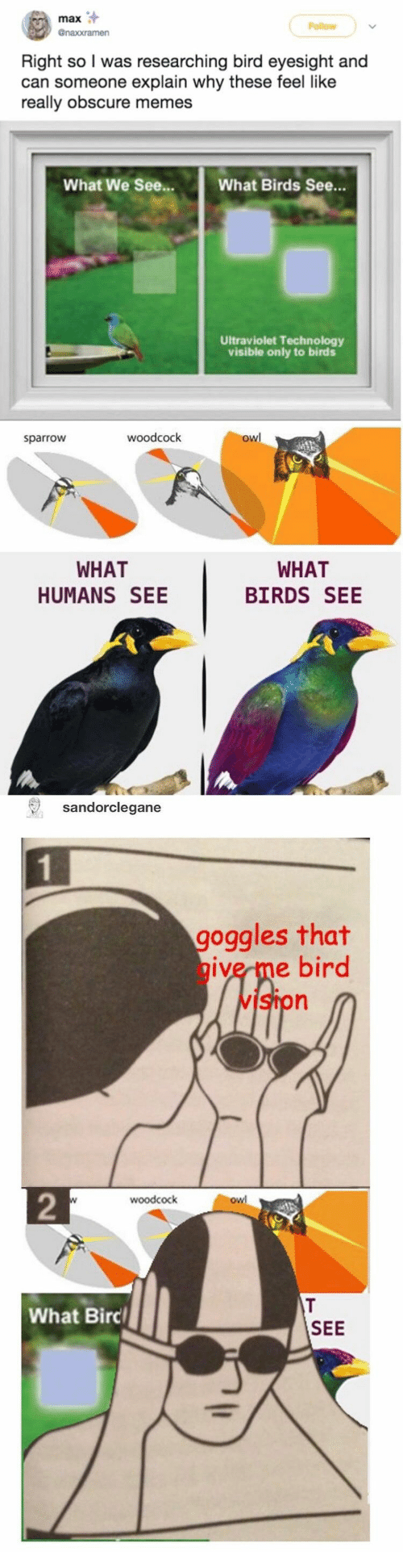 Memes, Birds, and Technology: max  Follow  @naxxramen  Right so I was researching bird eyesight and  can someone explain why these feel like  really obscure memes  What We See...  What Birds See...  Ultraviolet Technology  visible only to birds  owl  woodcock  sparrow  WHAT  WHAT  HUMANS SEE  BIRDS SEE  sandorclegane  goggles that  give me bird  vIston  2  woodcock  owl  T  What Birc  SEE