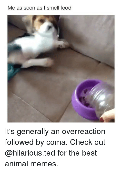 Overreaction: Me as soon as I smell food It's generally an overreaction followed by coma. Check out @hilarious.ted for the best animal memes.