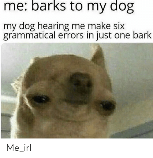 My Dog: me: barks to my dog  my dog hearing me make six  grammatical errors in just one bark Me_irl