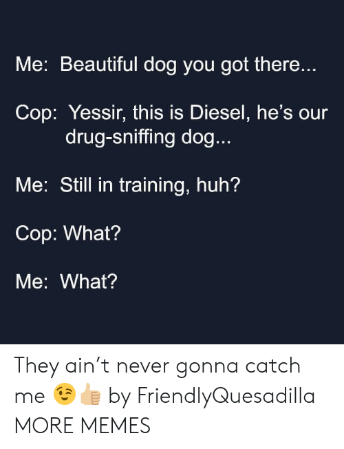 Beautiful, Dank, and Huh: Me: Beautiful dog you got there...  Cop: Yessir, this is Diesel, he's our  drug-sniffing dog...  Me: Still in training, huh?  Cop: What?  Me: What? They ain't never gonna catch me 😉👍🏼 by FriendlyQuesadilla MORE MEMES