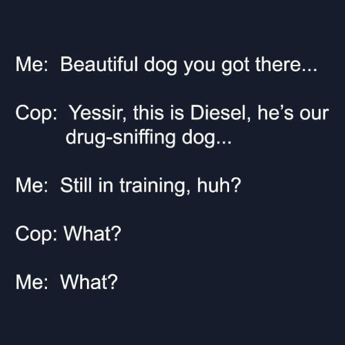 Beautiful, Huh, and Diesel: Me: Beautiful dog you got there...  Cop: Yessir, this is Diesel, he's our  drug-sniffing dog...  Me: Still in training, huh?  Cop: What?  Me: What?