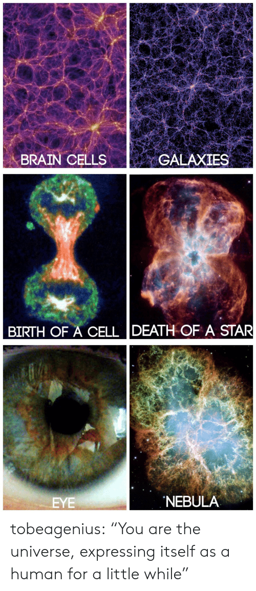"""Target, Tumblr, and Blog: ME  BRAIN CELLSGALAXIES   BIRTH OF A CELL DEATH OF A STAR   EYE  NEBULA tobeagenius:  """"You are the universe, expressing itself as a human for a little while"""""""