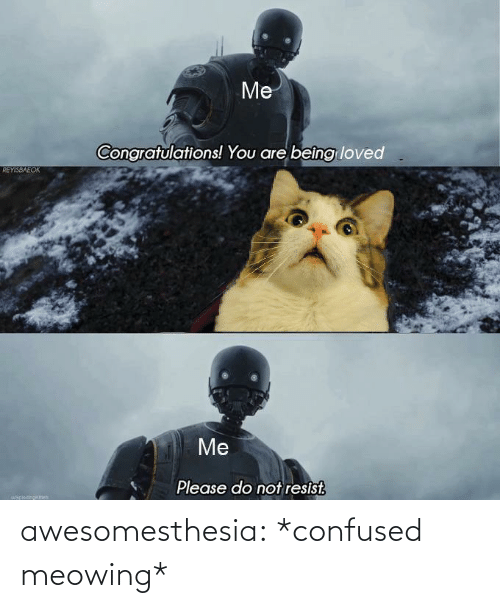 confused: Me  Congratulations! You are beîng loved  REYISBAEOK  Me  Please do not resist.  uapiocinokch awesomesthesia:  *confused meowing*