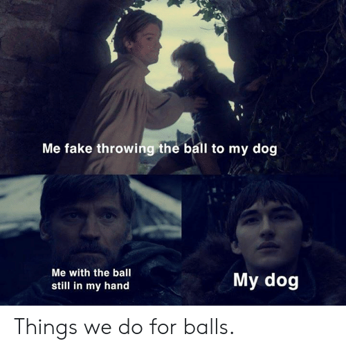 Dank, Fake, and 🤖: Me fake throwing the ball to my dog  Me with the ball  still in my hand  My dog Things we do for balls.
