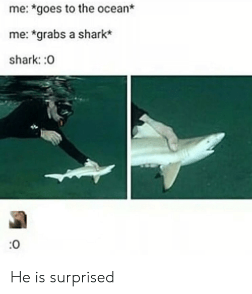 Shark, Ocean, and Surprised: me: *goes to the ocean*  me: *grabs a shark*  shark: :0  :0 He is surprised