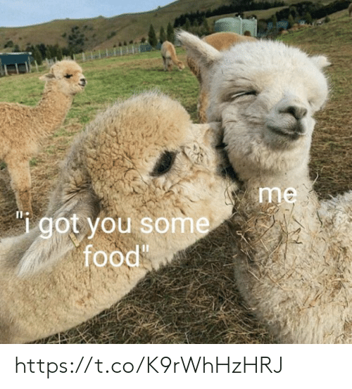 Food, Memes, and 🤖: me  got you some  food https://t.co/K9rWhHzHRJ