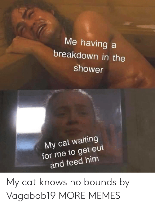 In The Shower: Me having a  breakdown in the  shower  My cat waiting  for me to get out  and feed him My cat knows no bounds by Vagabob19 MORE MEMES