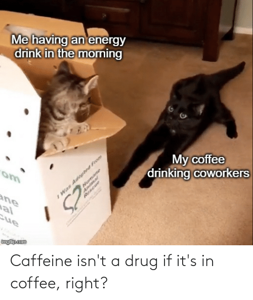 Drinking, Reddit, and Animal: Me having an'energy  drink in the morning  I Was Adepted From  Animal  My coffee  drinking coworkers  ane  al  Humane  Rescue  cue  imgiip.com Caffeine isn't a drug if it's in coffee, right?