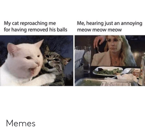 meow: Me, hearing just an annoying  My cat reproaching me  for having removed his balls  meow meow meow Memes