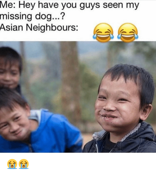 Missing Dog: Me:  Hey have you guys seen my  missing dog...?  Asian Neighbours: e 😭😭