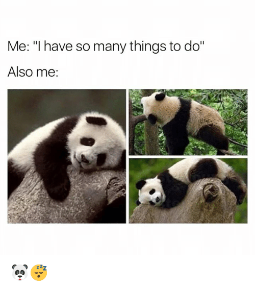 """Alsoe: Me: """"I have so many things to do""""  Also me: 🐼😴"""