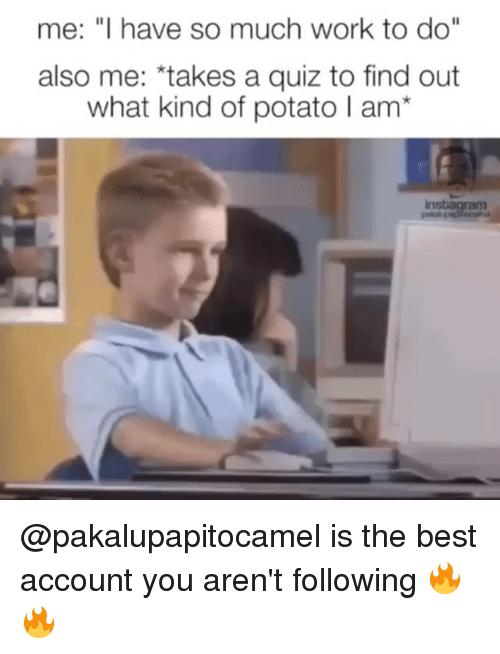 "Funny, Work, and Best: me: ""I have so much work to do""  also me: *takes a quiz to find out  what kind of potato I am* @pakalupapitocamel is the best account you aren't following 🔥🔥"