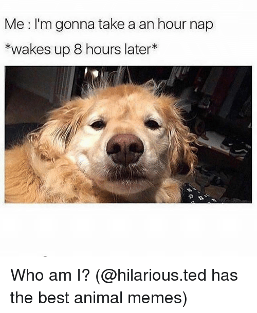8 Hours Later: Me I'm gonna take a an hour nap  *wakes up 8 hours later* Who am I? (@hilarious.ted has the best animal memes)