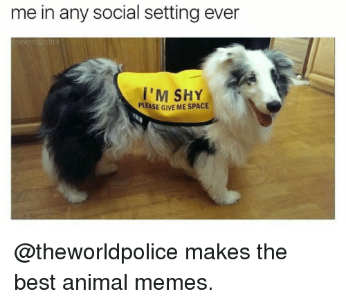 Animals Meme: me in any social setting ever  the Worldpolice  I'M SHY  PLEASE G  MESPACE @theworldpolice makes the best animal memes.
