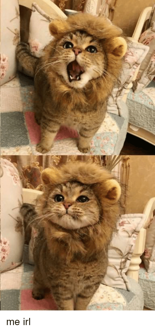 Lion, Irl, and Me IRL: me irl