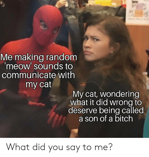 Bitch, Cat, and Random: Me making random  'meow' sounds to  communicate with  my cat  My cat, wondering  what it did wrong to  deserve being called  a son of a bitch What did you say to me?